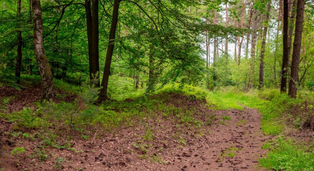Waldauenweg 60