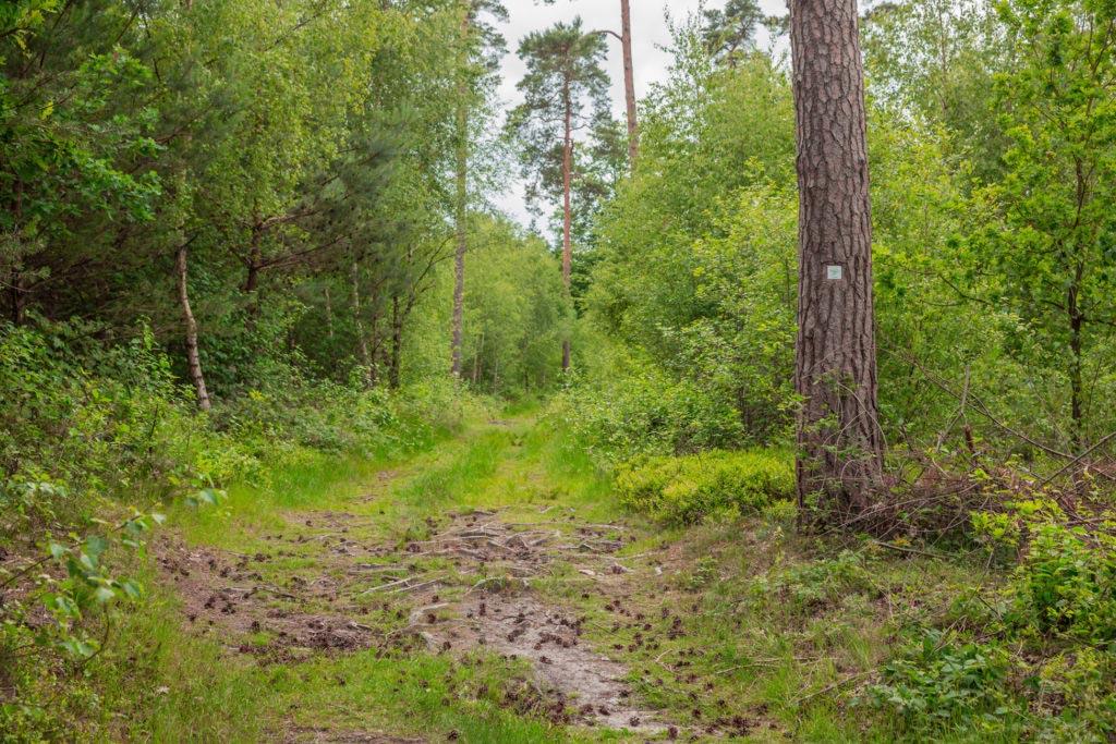Waldauenweg 61