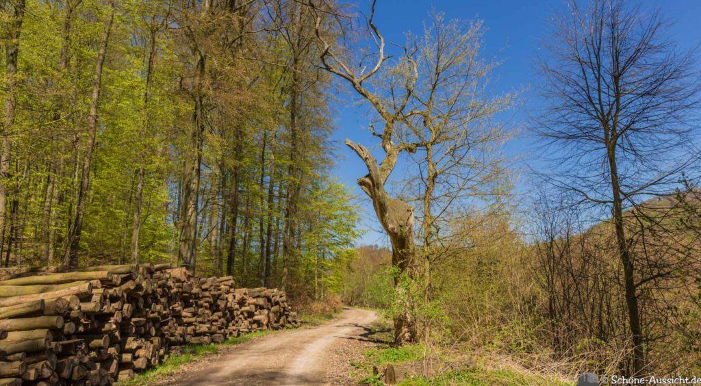 Werra-Burgen-Steig Hessen 258