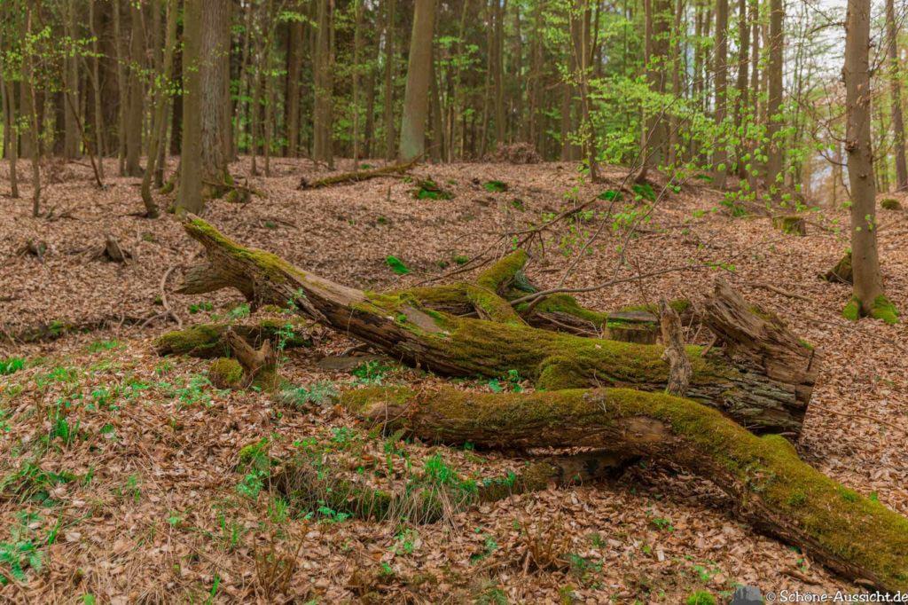 Werra-Burgen-Steig Hessen 187