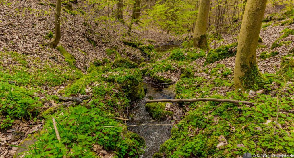 Werra-Burgen-Steig Hessen 190
