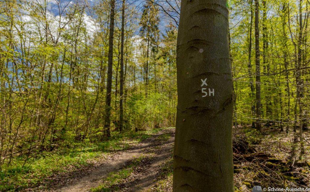 Werra-Burgen-Steig Hessen 206