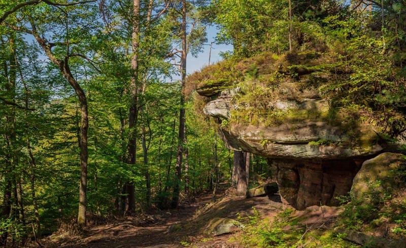 Der Altschloßpfad zum Altschloßfelsen - Unverhofft beeindruckend 123