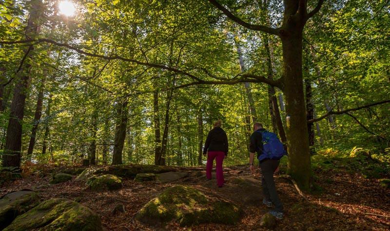 Der Altschloßpfad zum Altschloßfelsen - Unverhofft beeindruckend 145