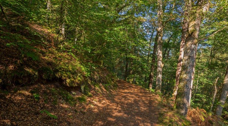 Der Altschloßpfad zum Altschloßfelsen - Unverhofft beeindruckend 117