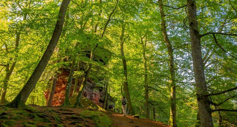Der Altschloßpfad zum Altschloßfelsen - Unverhofft beeindruckend 154