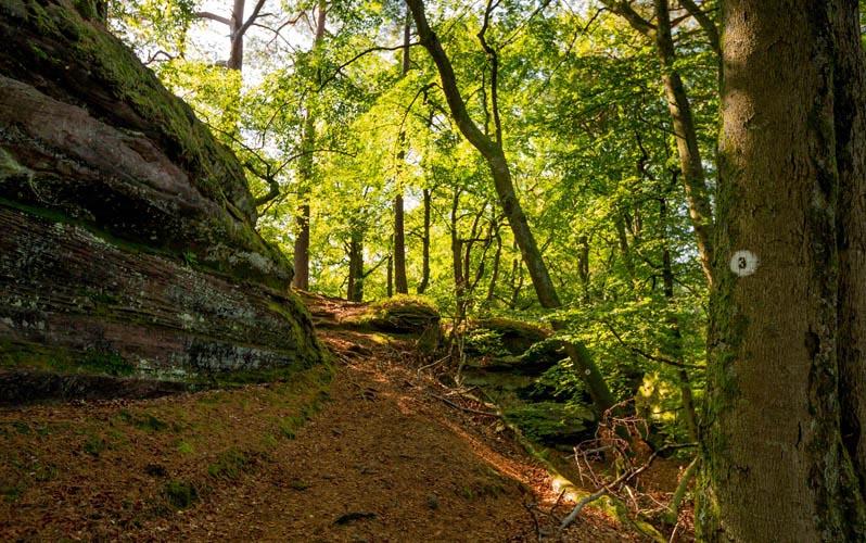 Der Altschloßpfad zum Altschloßfelsen - Unverhofft beeindruckend 161