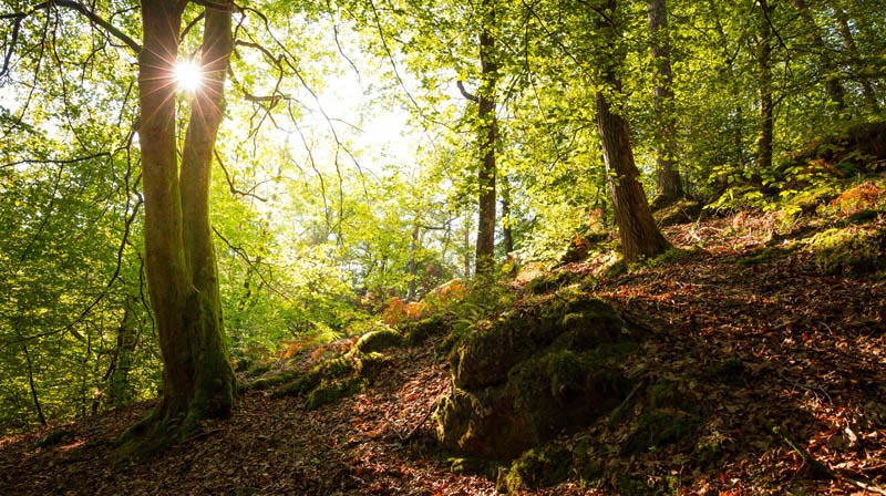 Der Altschloßpfad zum Altschloßfelsen - Unverhofft beeindruckend 118