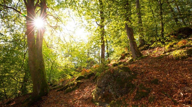 Der Altschloßpfad zum Altschloßfelsen - Unverhofft beeindruckend 119