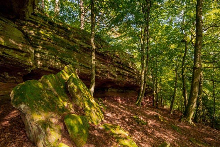 Der Altschloßpfad zum Altschloßfelsen - Unverhofft beeindruckend 182
