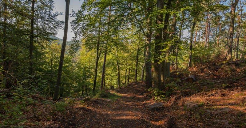 Der Altschloßpfad zum Altschloßfelsen - Unverhofft beeindruckend 120