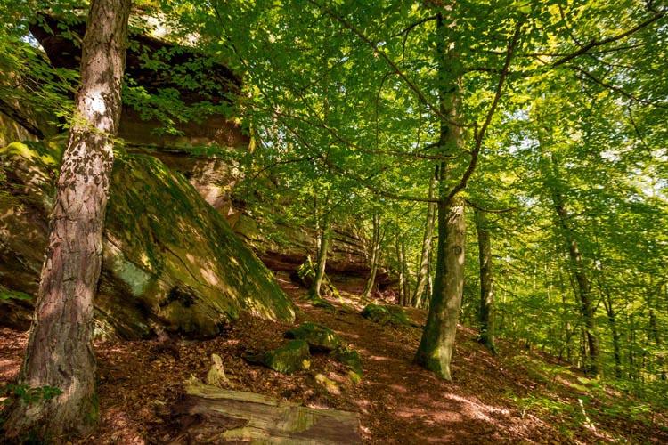 Der Altschloßpfad zum Altschloßfelsen - Unverhofft beeindruckend 184