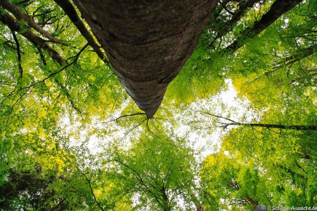 Wanderung Lammertaler Urwald 60