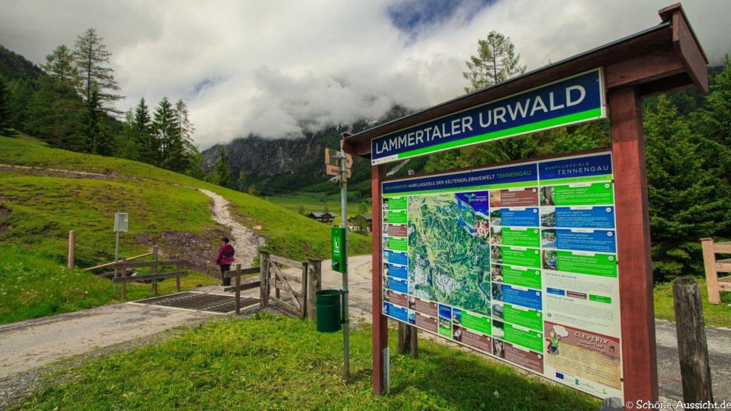 Wanderung Lammertaler Urwald 2