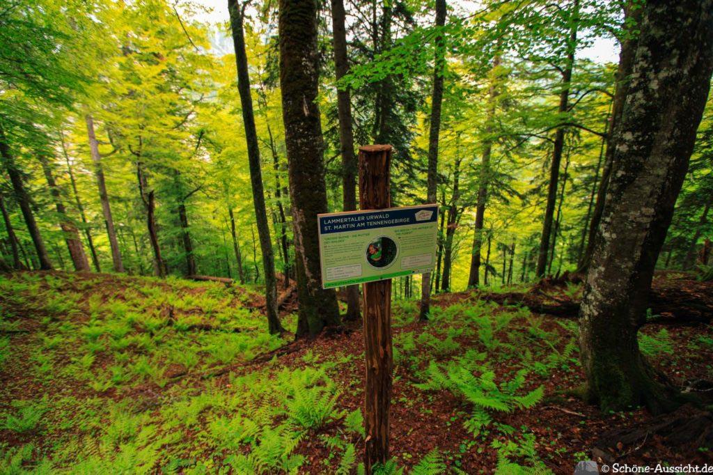 Wanderung Lammertaler Urwald 3