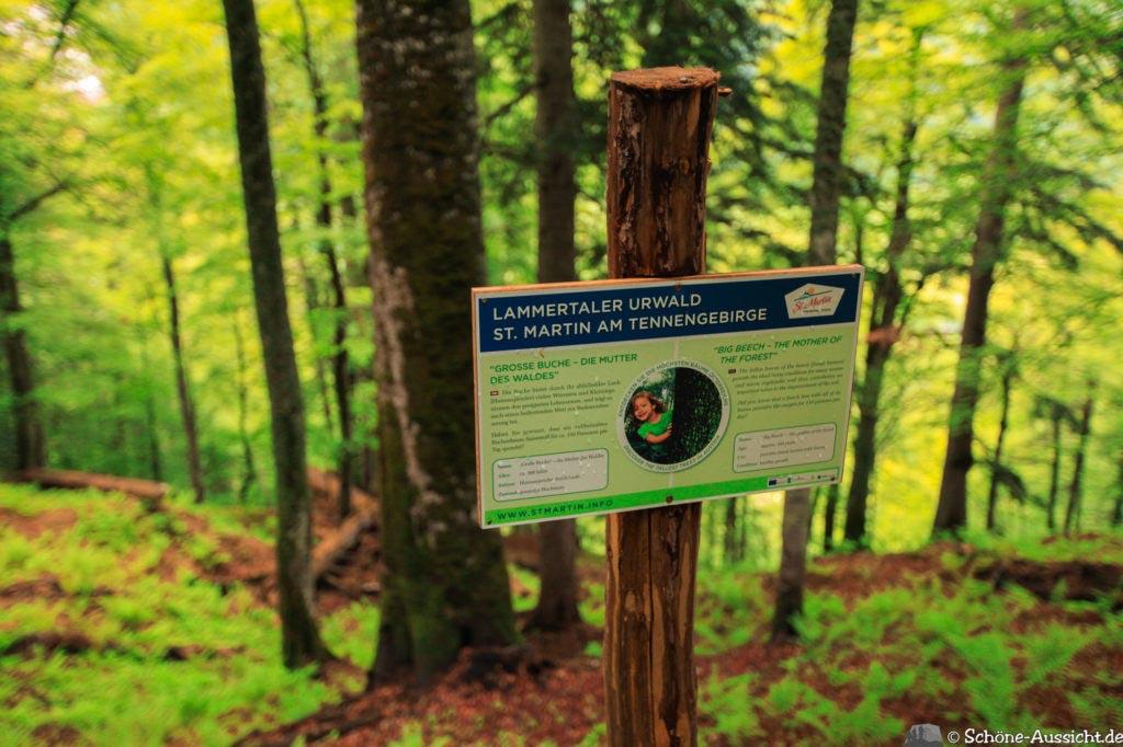 Wanderung Lammertaler Urwald 58