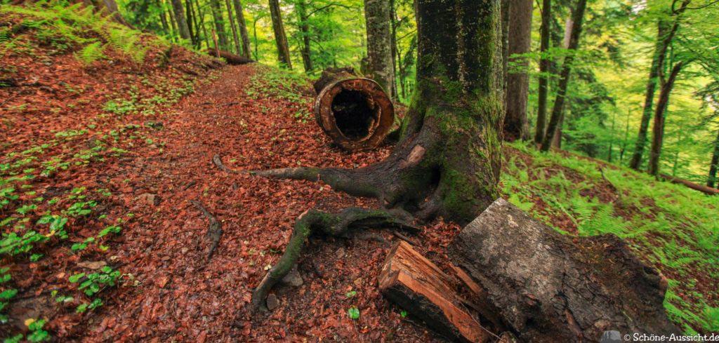 Wanderung Lammertaler Urwald 57