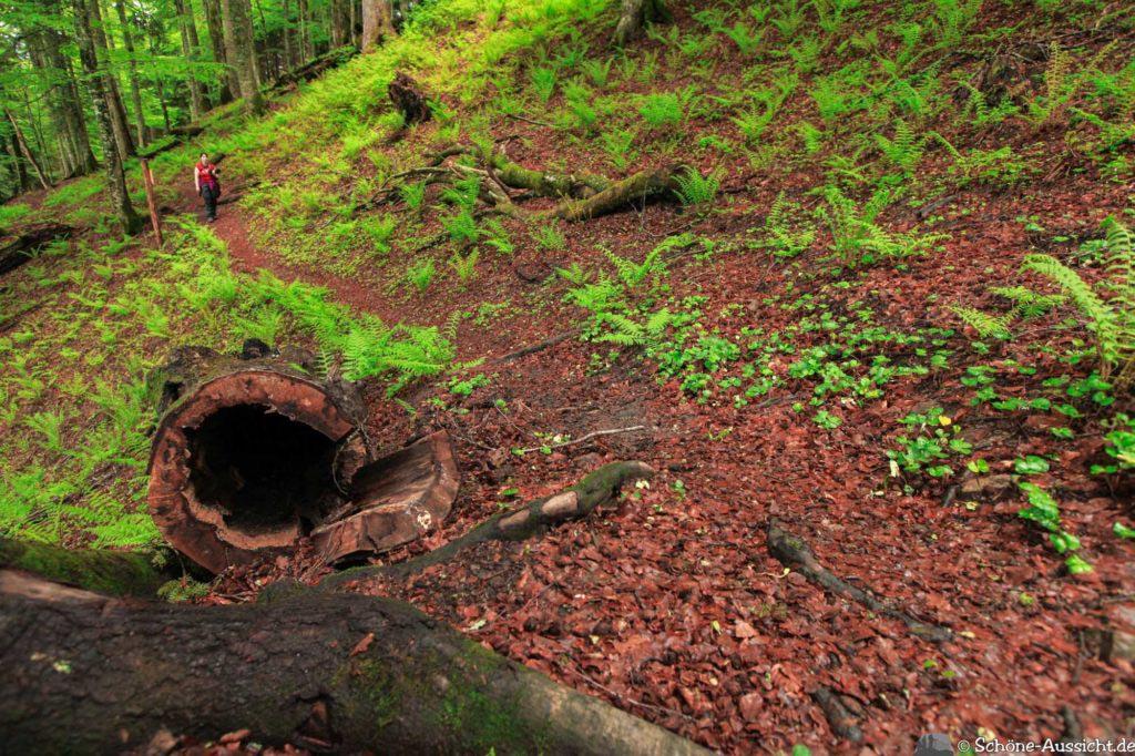 Wanderung Lammertaler Urwald 56