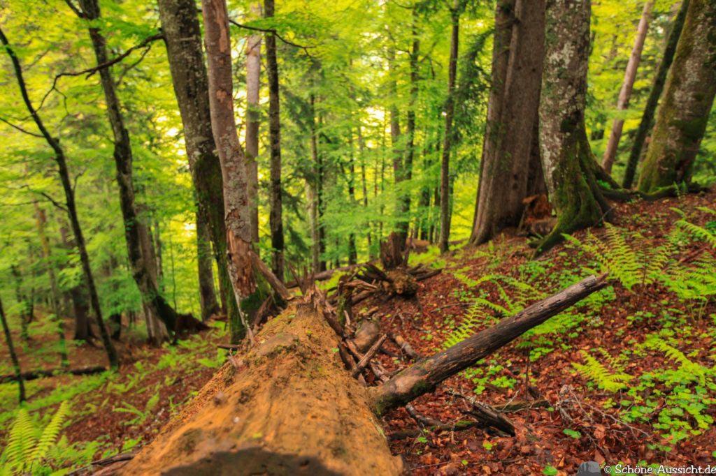Wanderung Lammertaler Urwald 55