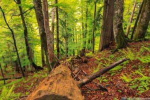 Wanderung Lammertaler Urwald 1