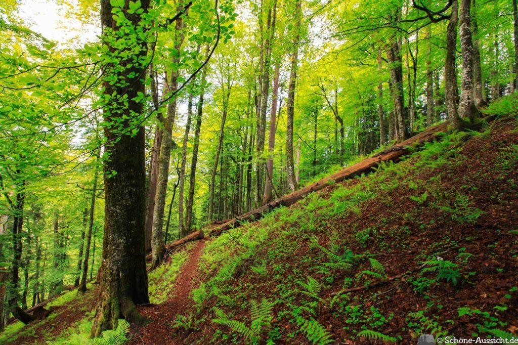 Wanderung Lammertaler Urwald 54