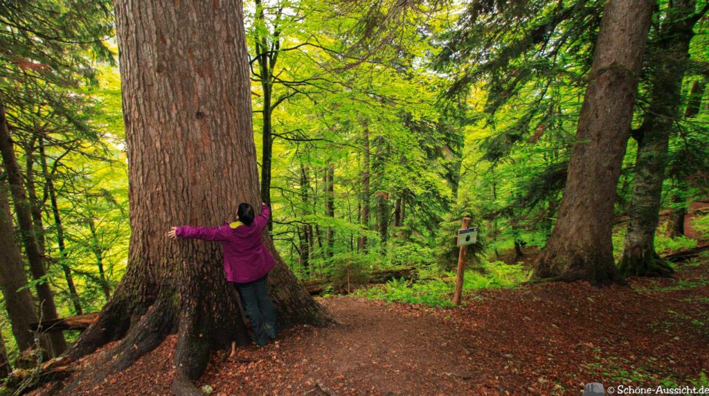 Wanderung Lammertaler Urwald 53