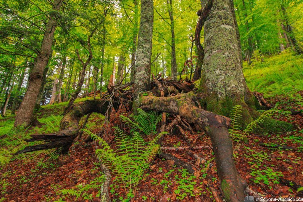 Wanderung Lammertaler Urwald 52
