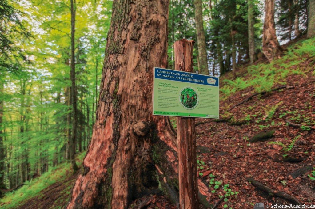 Wanderung Lammertaler Urwald 50