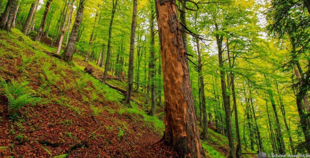 Wanderung Lammertaler Urwald 49