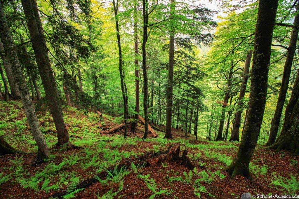 Wanderung Lammertaler Urwald 61