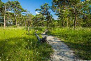 Wanderung Mittenwald zum Kranzberggipfel 6