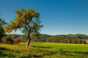 Der Salzalpensteig - Alles zum Weitwanderweg und 18 Etappen 1
