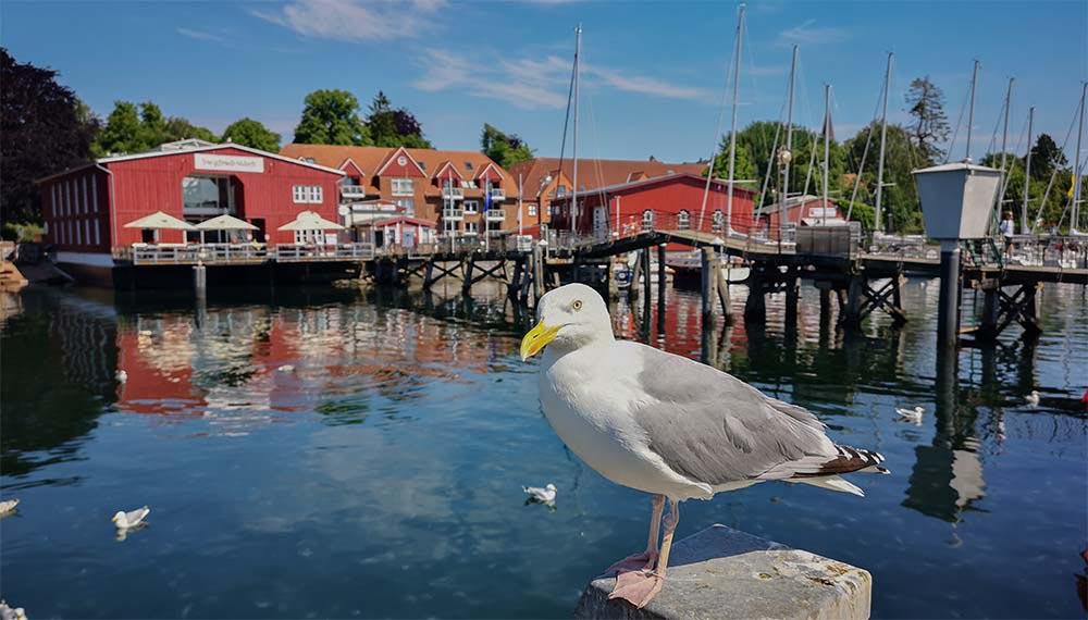 Eckernförde - Mit der charmanten Hafenbucht 8