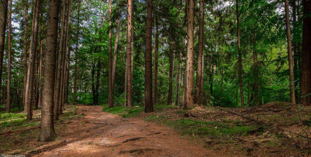 Rundwanderung um Wilsede - Das deutsche Hobbingen? 120