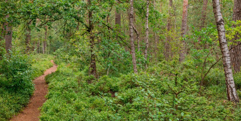 Nordpfad Dör't Moor - Zwischen Urwald und Pfaden 160