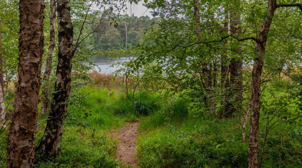 Nordpfad Dör't Moor - Zwischen Urwald und Pfaden 162