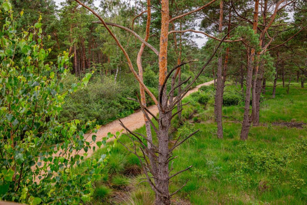 Nordpfad Dör't Moor - Zwischen Urwald und Pfaden 118