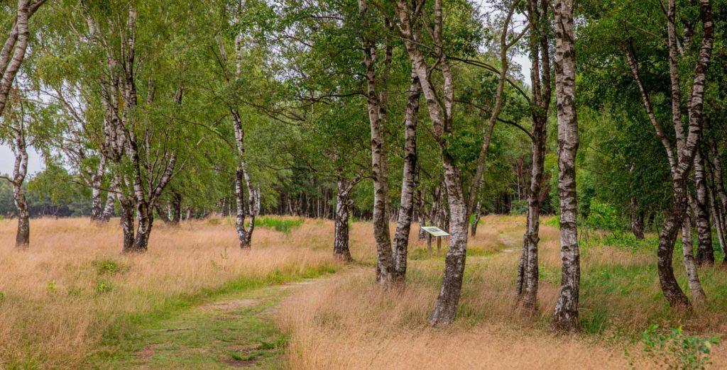 Nordpfad Dör't Moor - Zwischen Urwald und Pfaden 131