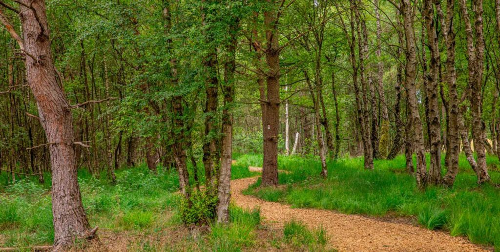 Nordpfad Dör't Moor - Zwischen Urwald und Pfaden 134