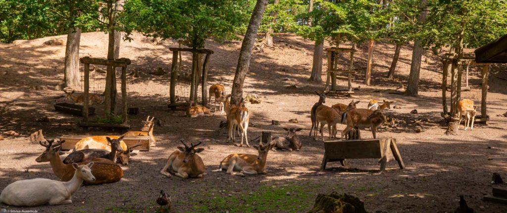 wildpark Rotwild