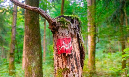 Spirgelbacher Höllenberg Tour