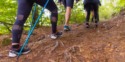 Wald Marathon - 7 Premiumwege und Saumagen 2
