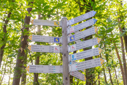 Wald Marathon - 7 Premiumwege und Saumagen 6