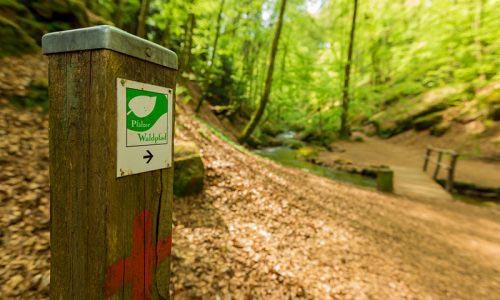 Adventurewalk Pfälzerwald 25 / 50 34