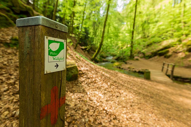 Adventurewalk Pfälzerwald 25 / 50 1